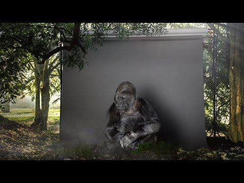 Koko the Gorilla Has an Urgent Message for Humans About Protecting the Planet (VIDEO) | One Green Planet