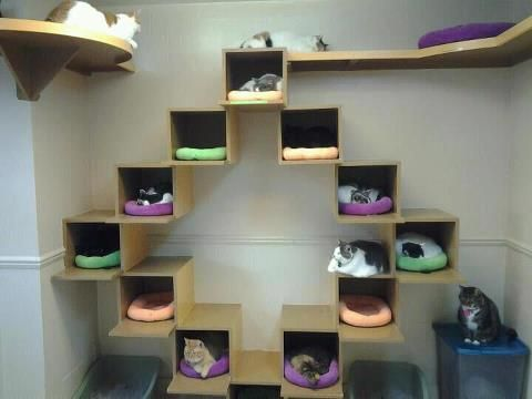 High Quality Cat Houses What If You Got An Ikea Box Furniture Set, And Had Dedicated  Cubes For Cat Beds With Ledges On Certain Cubes?