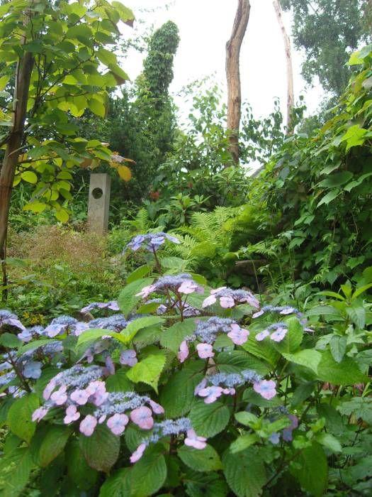Tellerhortensie: tropischer Garten von Gartenarchitekturbüro Timm