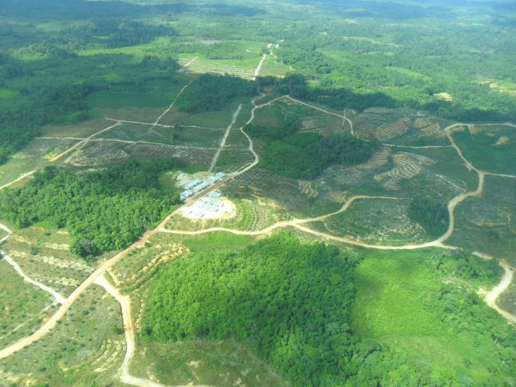 The opening of oil palm plantations on a large scale in the area Belitang Downstream, Sekadau District, West Kalimantan, Indonesia by PT.LG. We recommend that you do not vacation there, because there is no more forest as told by the ancient tales.