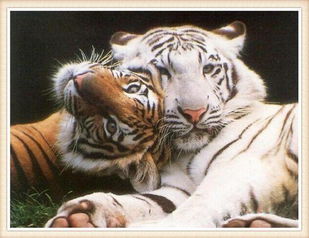 Meer dan 1000 idee n over tijger schilderij op pinterest chinees schilderij tekening van de - Trendy kamer schilderij ...