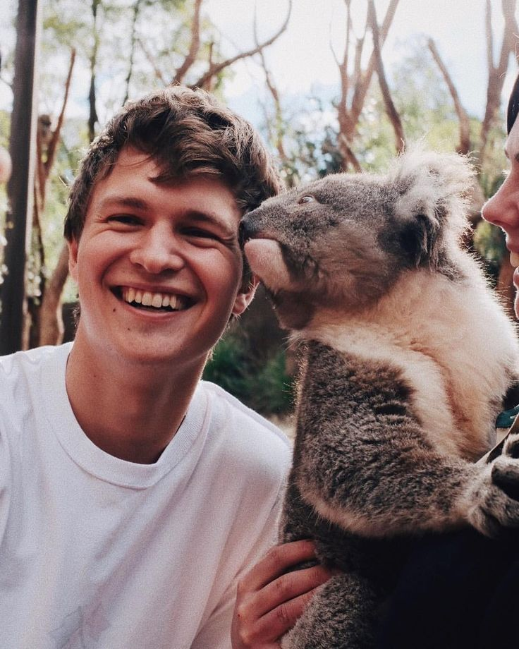 "451.9k Likes, 2,230 Comments - Ansel Elgort (@ansel) on Instagram: ""❤️❤️ OMFG KOALA KISS!!!"""
