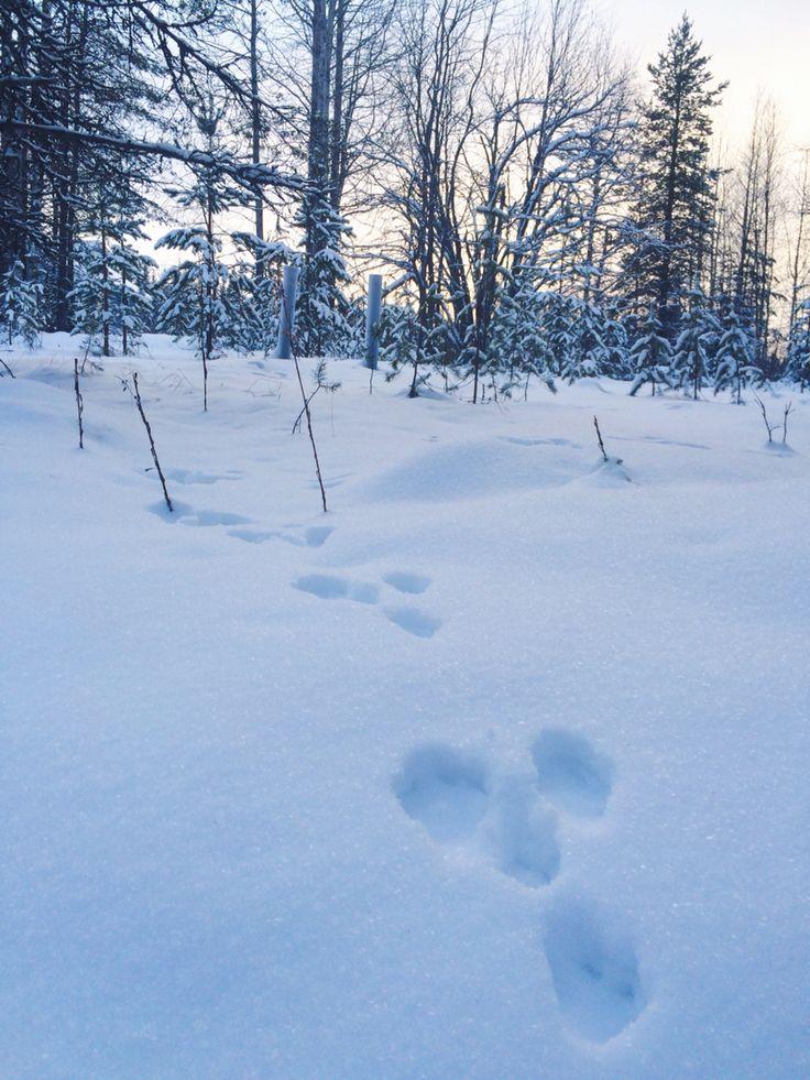 Syöte, Finland