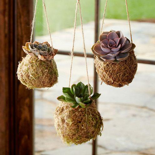 Kokedama Hanging String Gardens  | VivaTerra
