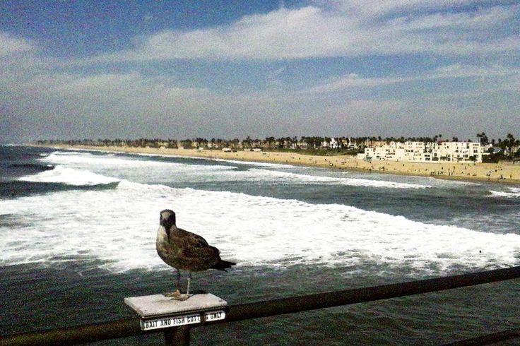 Autor: Piervi Fonseca | Série: Paraíso do Surf | Ano: 2012 | Título: Elemento Surpresa | Descrição: Praia de Huntington Beach, localizada no litoral do Condado de Orange, no estado norte-americano da Califórnia.