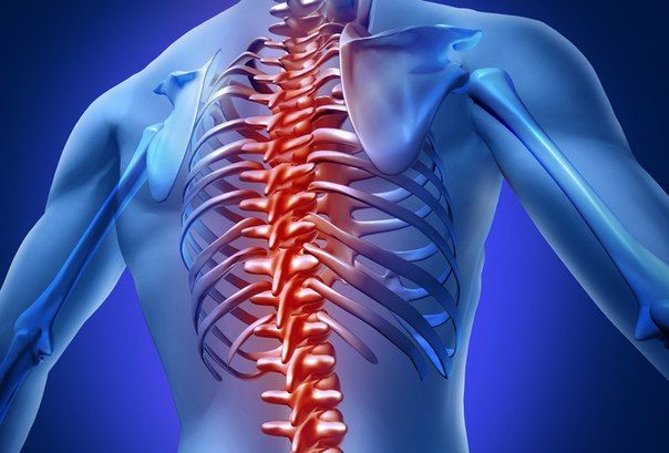 ✅У большинства людей значительно смещен первый шейный позвонок (Атлант). Коррекция его положения влияет на весь позвоночник и запускаем механизм самоисцеления.  Здоровье поднимается на более высокий уровень. Укрепляется общее здоровье.  Исчезают боли в пояснице.  Во время поворотов головы шея отдыхает.  Головная боль становиться незначительной или уходит совсем.  Осанка исправляется.  Походка становиться более легкой.  Работоспособность увеличивается.  Остеохондроз шейного позвонка…