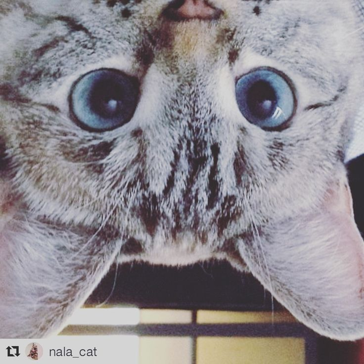顔が逆さまですにゃん!(=^ェ^=)www  #Repost @nala_cat ・・・ You are valuable and important. Thank you for being in our lives 💖