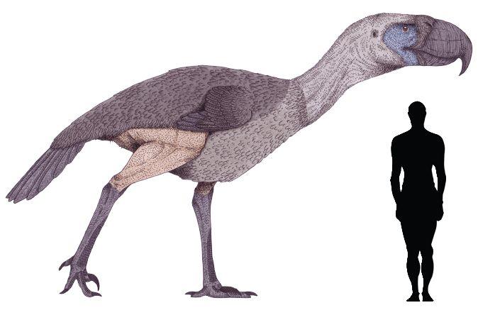 Prehistoric taxonomy | Kelenken guillermoi (indigenous Indian for a...