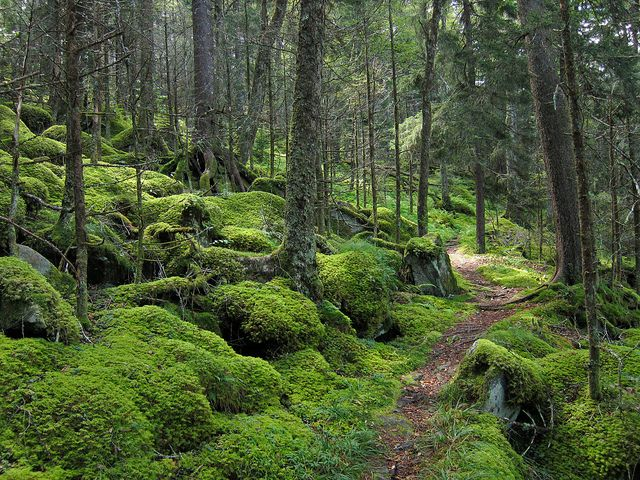 Forest on Baxter Creek Trail in Great Smoky Mountains National Park