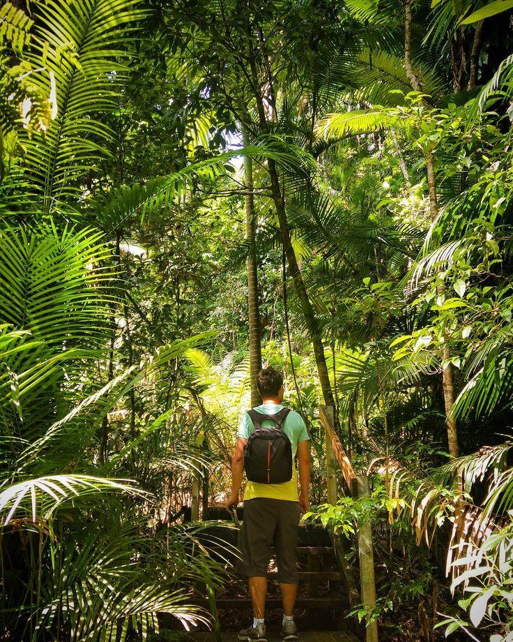 Para chegar na região de Daintree a floresta tropical mais antiga do mundo é necessário atravessar de balsa o rio Daintree recheado de crocodilos  Assim que você atravessa o cenário muda completamente. Você percebe que está dirigindo dentro de uma floresta e que a qualquer momento animais selvagens podem cruzar o seu caminho.  Uma experiência bem interessante logo no início é visitar o Daintree Discovery Centre que é um parque dentro da floresta onde você aprende in loco diversas informações…