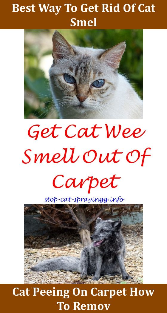 Anti Cat Spray For Furniture Urine Remover Female Neutered Spraying Out Of Carpet Dogs Clothes