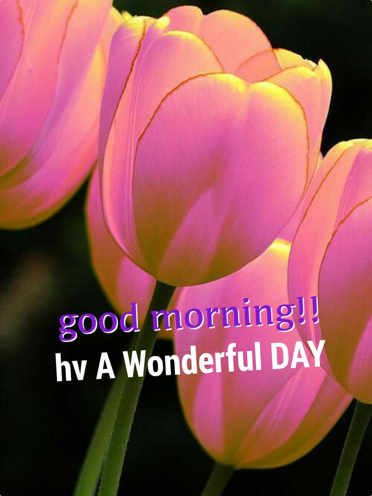 Good Morning Japanese Greeting : Best images about good morning on pinterest