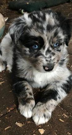 J'ai besoin de ce chien. Ça fond mon, si je le regarde seulement! – # …  …