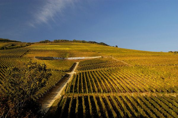 Hétszőlő Vineyard, Tokaj