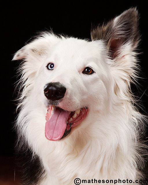 I would love to have a Border Collie- every one that I have met I have fallen in love with.