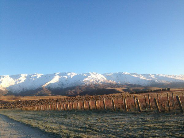 Amisfield Sauvignon Blanc Nobel pick under snow-capped mountains.
