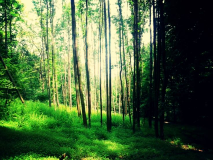 The most beautiful part of a forest in Slovakia.