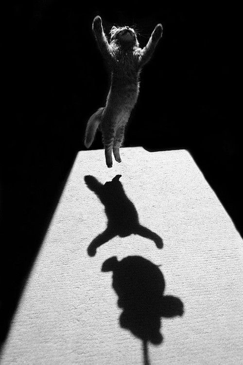 Nesne YalındırLights Cameras Action, Dance Moving, Black And White, Teddy Bears, Shadows Photography, Leap Of Faith, Kittens, Animal, White Cat