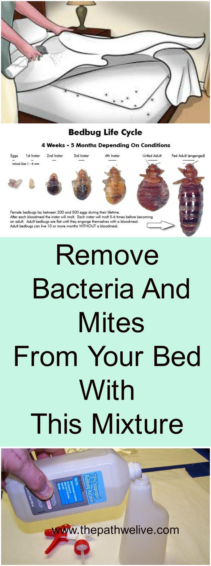 #Remove #Bacteria #Mites #Bed #Mattresses #Alcohol #Natural #Mixture #Health #Home