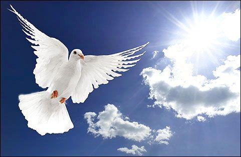 De vredesduif staat voor VREDE. Het verwijst naar de vogel die door Noach werd losgelaten nadat de ark was vastgelopen op de berg Ararat. De duif kwam na een zoektocht teruggevlogen met een olijftakje in de snavel. Dat betekende dat de aarde na de zondvloed weer was drooggevallen
