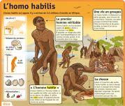 L'homo habilis - Le Petit Quotidien, le seul site d'information quotidienne pour les 6 - 10 ans !