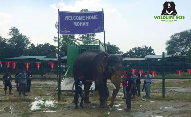 """HALLELUJAH!!!!!!!!!!!!!!!!!  World's """"Unluckiest Elephant"""" Is Finally Free After 50 Years of Abuse -  WELCOME HOME MOHAN!!!!!!!!!!"""