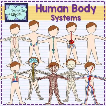 Human Body systems clipart BUNDLE {Science clip art}
