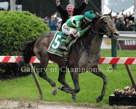 Exaggerator Wins 2016 Preakness Stakes - Framed/Unframed Photos
