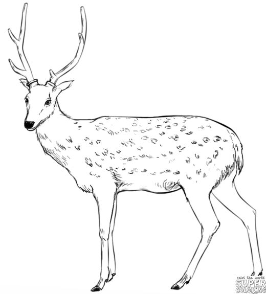 how to draw a baby deer step by step