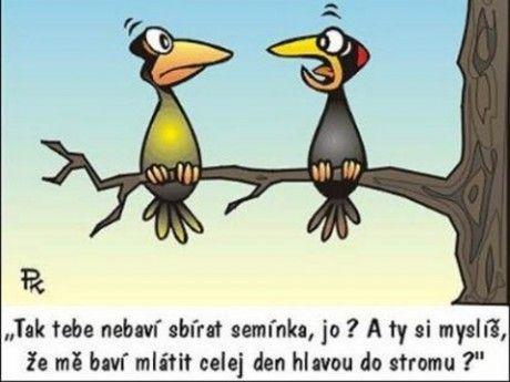 www.juglon.estranky.sk - Fotoalbum - Kreslené vtipy - 25 x Pavel Kantorek - Kantorek jazevamspa.jpg