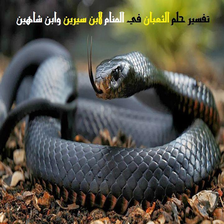 تفسير حلم الثعبان في المنام لابن سيرين وابن شاهين Mamba Snake Black Mamba Snake Snake Wallpaper