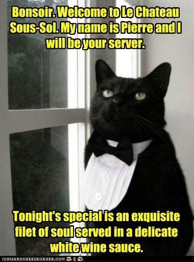 .: Animals, Tuxedo Cats, Black Butler, Black Cats, Pets, Funny, Kitty, Blackcat, Tuxedos