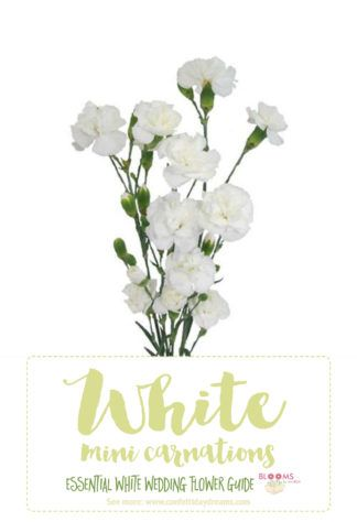 White flowers names: mini carnations are wery hardy, an especially great option for DIY brides! Click here for 20+ white wedding flowers: http://www.confettidaydreams.com/types-of-white-wedding-flowers-names/