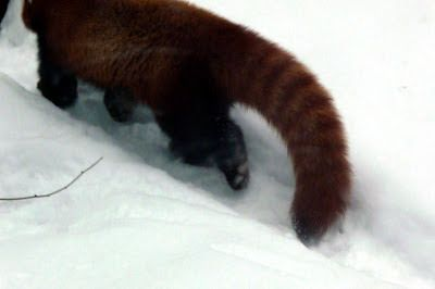 Jemina Staalon Veden vuosi 2: Pikku panda temmeltää nietoksissa