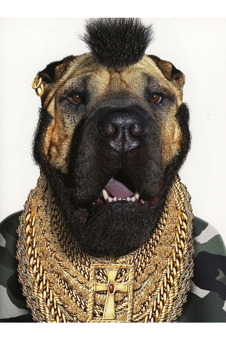 Les 112 meilleures images du tableau Dog Costumes sur ...