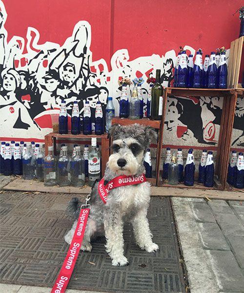 シュプリーム 犬用 リード ハーネス セット おしゃれ supreme リードとハーネスのセット 大人気 ハーネス調整可 小型犬用品 中型犬用品 ブランド 犬用品