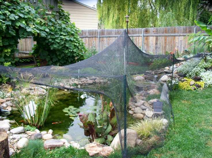The pond covered for fall leaves water gardening koi for Koi pond upkeep