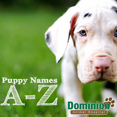 Having some trouble coming up with a name for your new puppy? Say no more and click here to find puppy names from A to Z!