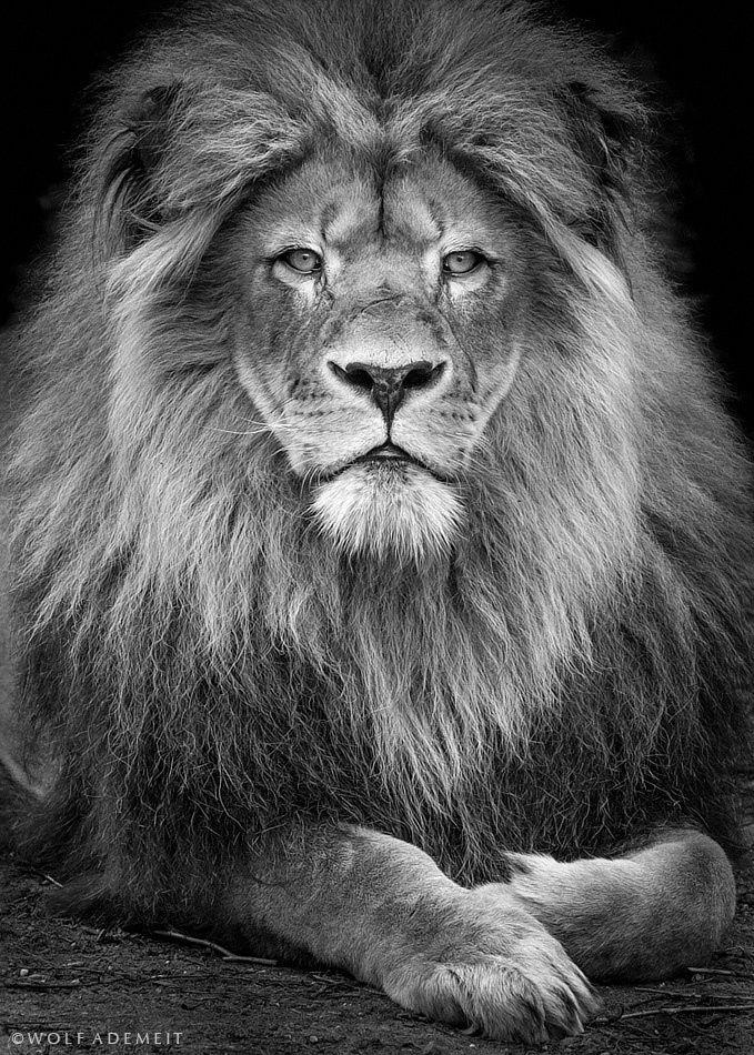 Deze foto heb ik deels gebruikt voor de manen van de leeuw