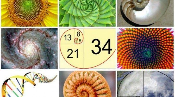 La magie de Fibonacci dans la nature – les maths de Dieu La suite de Fibonacci : 0, 0, 1, 1, 2, 3, 5, 8, 13, 21, 34, 55, 89, 144, 233, 377, 610, 897...