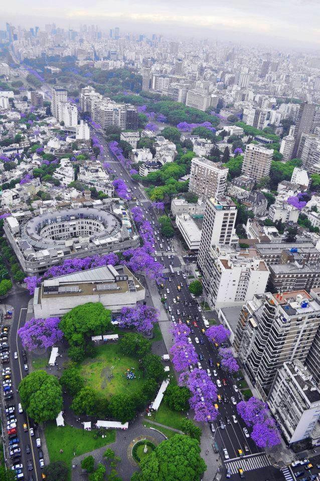 Jacarandás desde el cielo. Abajo, Av. Figueroa Alcorta y Salguero. Buenos Aires.