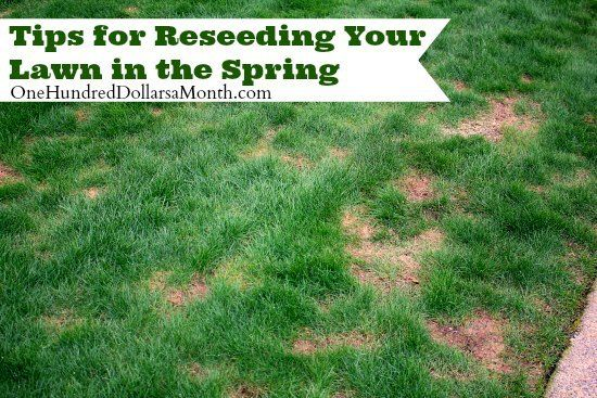 Are you reseeding your lawn this spring? Here are some simple steps to follow to do this easily.
