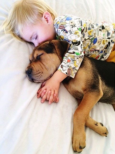 Best Theo Beau Unconditional Love Images On Pinterest - Theo beau cutest animal human pairing ever