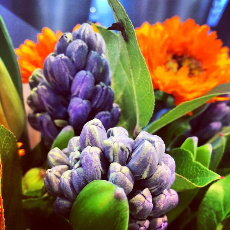 Flowers in Cambridge.