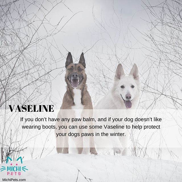 Vaseline Pawrotection Dog Puppy Cat Kitty Paws Safety Snow Winter Dogsofinstagram Catsofinstagram Security Cats Safetyfi Your Dog Dogs Pets
