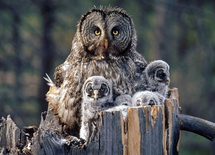 My little Tatum..will love this.....she has a love for Owl's....xoxo