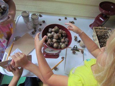 Exploring acorns in preschool - Teach Preschool