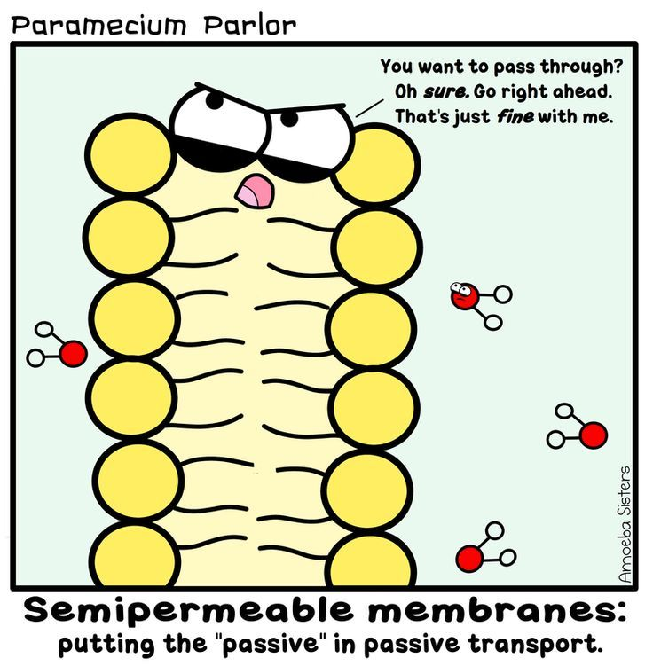 "Passive transport brought to you by the amoeba sisters as ""passive aggressive cell transport"" :)"
