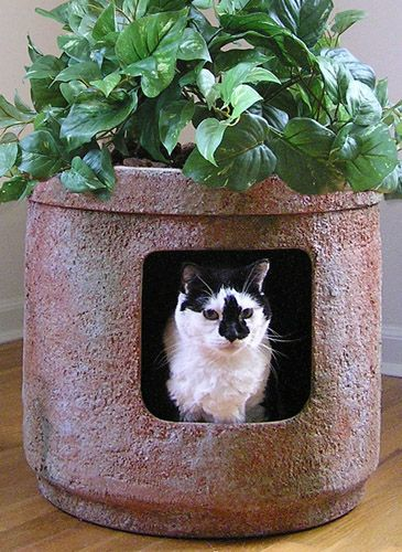 Pets Best Products Signature Hidden Litter Planter For Cats
