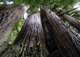 Redwood National Park in Crescent City, CA